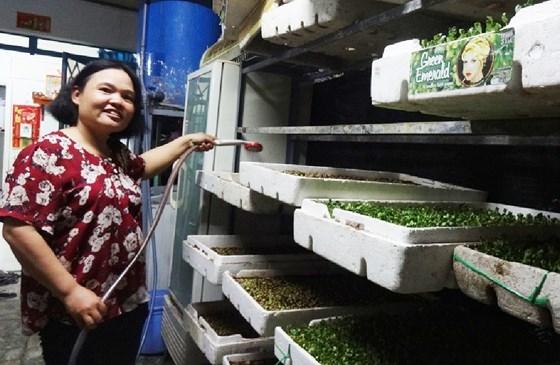 Làm giàu với rau mầm, lợi nhuận mỗi ngày kiếm 300.000 đồng (sau khi trừ chi phí)