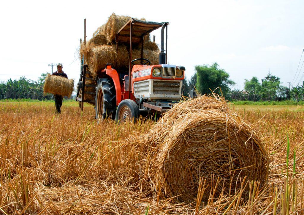 Sản phẩm kinh doanh hiệu quả: Rơm khô trở thành mặt hàng được săn tìm mua