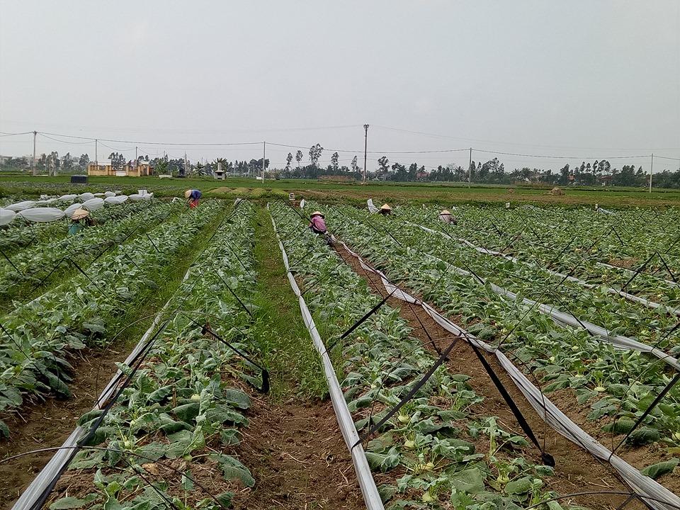 Trở thành người giàu nhất làng, cô nông dân trồng rau xuất sang Nhật Bản