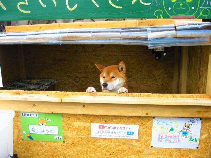 Ý tưởng để thú cưng bán khoai nướng hốt bạc, khách hàng săn tìm mua khoai nướng