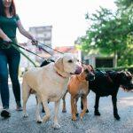 Cách kiếm tiền từ dắt chó đi dạo thu nhập 1 tỉ mỗi năm