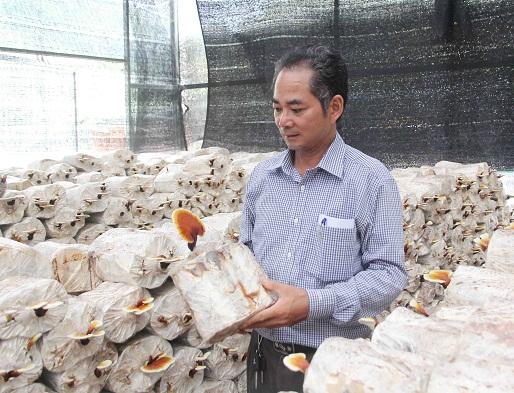 Củi khô trở thành ý tưởng sinh lãi chuyên lợi