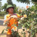 Vườn hoa hồng cho thu lãi 200 triệu đồng đẹp ngào ngạt mùi hương thơm