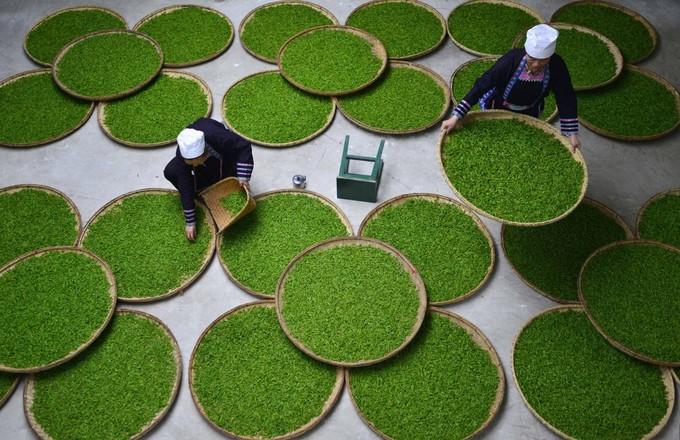 Những ý tưởng làng nghề kiếm tiền từ Thực phẩm lớn nhất của Trung Quốc