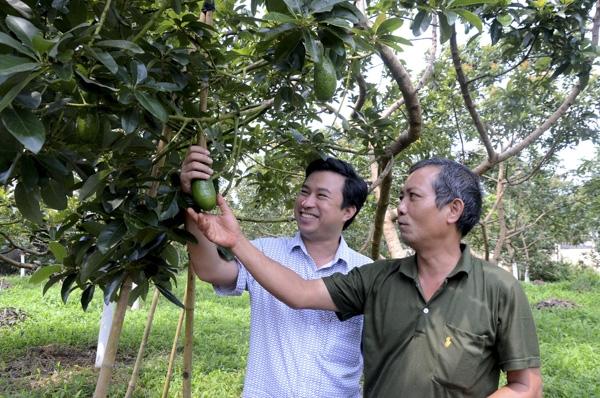 Ý tưởng trồng cây Bơ trái vụ, mỗi năm lãi hơn 4 tỷ