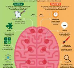 Ý tưởng để khai thác trí não đạt hiệu quả tối đa