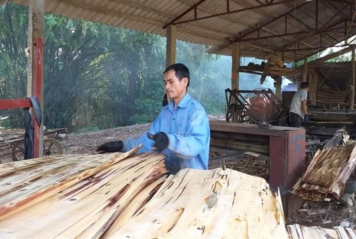 Ý tưởng khởi nghiệp với gỗ bóc, thu 300 triệu