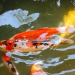 Ý tưởng nuôi cá cảnh của 9X, 10X thu về tiền tỷ