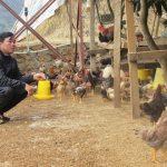 Ý tưởng buôn bán gì ở nông thôn kiếm tiền siêu giàu