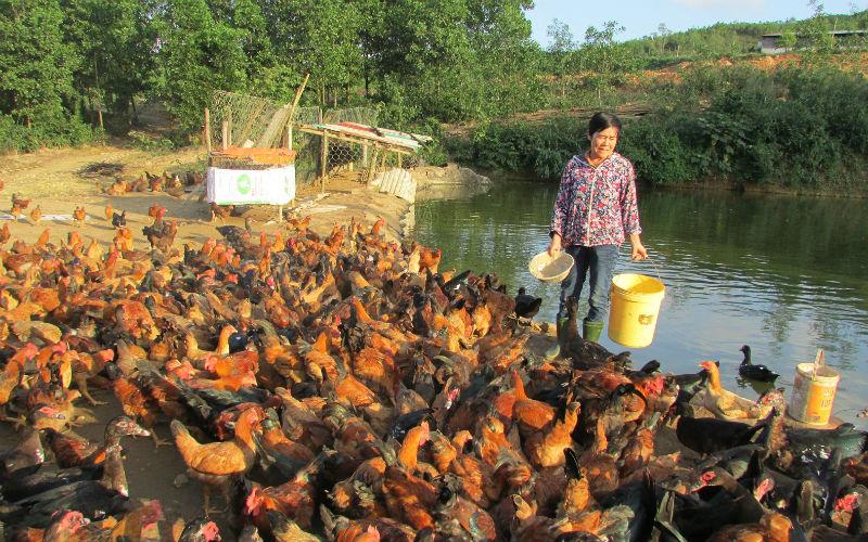Ý tưởng Bí quyết làm giàu ở nông thôn kiếm tiền nhiều nhất