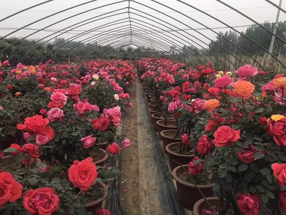 Ý tưởng Kiếm tiền từ trồng hoa