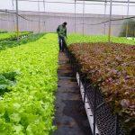 Ý tưởng Kinh nghiệm làm giàu từ nông nghiệp kiếm tiền hấp dẫn