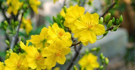 Các loại hoa bán chạy ngày Tết ( Kiếm tiền kinh doanh dịp Tết cuối năm).