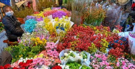 Kinh nghiệm bán hoa chậu ngày tết ( Kinh doanh Hoa quả ngày tết)