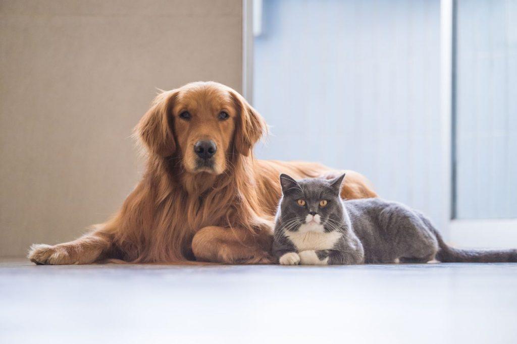 Hãy dùng Tiếng Anh để viết một bài (đoạn văn) tả hình ảnh con chó con cún