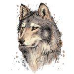 Ý nghĩa hình xăm con chó sói hợp với tuổi nào