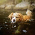 Mơ thấy chó bơi trong nước là báo hiệu cho điều gì