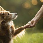 Mơ thấy con chó quấn quýt là báo hiệu cho điều gì