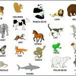 Tên những con vật bằng tiếng anh bắt đầu bằng chữ X