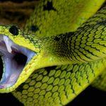 Mơ thấy rắn cắn chân chảy máu là báo hiệu cho điềm gì