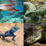 Sự đa dạng và đặc điểm chung của lớp bò sát ( và lớp Lưỡng cư)