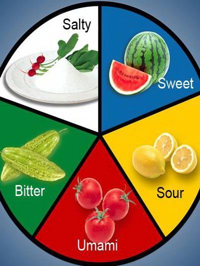 Tìm hiểu về 5 vị cơ bản trong ẩm thực, 5 vị cơ bản bao gồm những vị nào