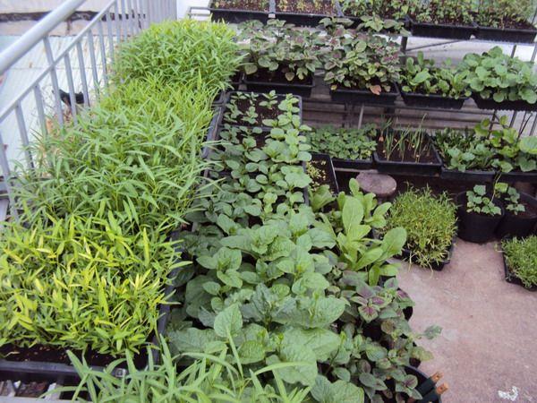 Ý tưởng trồng vườn rau quả tiết kiệm không gian, diện tích độc đáo cho hiệu quả cao